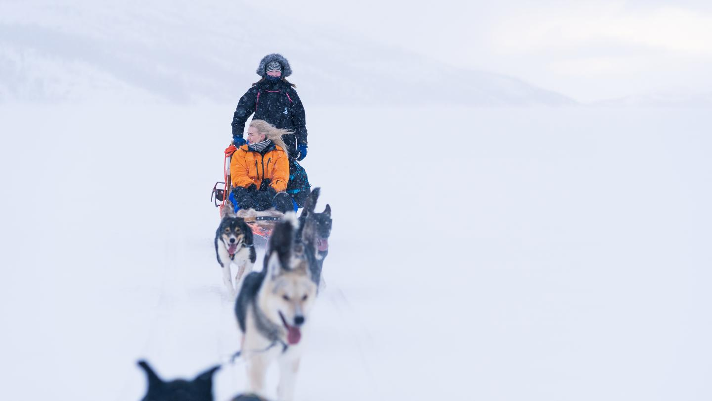 Dogsledding Kirkens